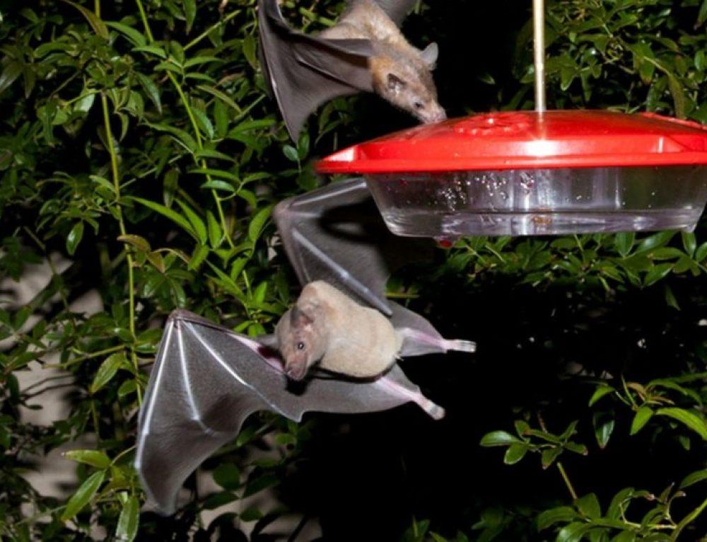 Walcher: Holy Hummingbird, Batman!