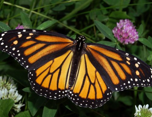 Walcher: Ode to a butterfly