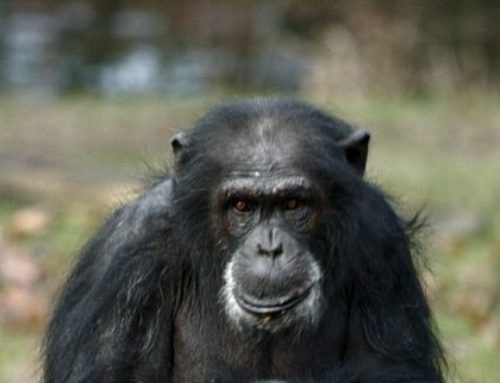 Heartland: EPA To 'Aggressively Reduce' Animal Testing