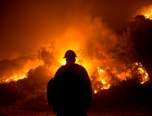 Breitbart: Experts: 'Eco-Imperialists' Preventing Forest Management Lead to Wildfires, Not Climate Change