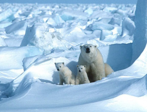 World Tribune: Unreported: Arctic sea ice is expanding in 'big chill' for climate alarmists
